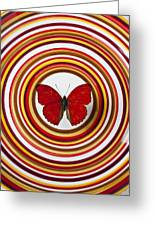 Red Butterfly On Plate With Many Circles Greeting Card by Garry Gay