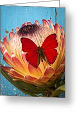 Red Butterfly On Protea Greeting Card
