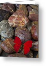 Red Butterfly On Rocks Greeting Card