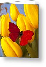 Red Butterful On Yellow Tulips Greeting Card