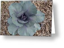 Red Cabbage Greeting Card