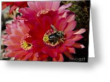Red Cactus Flower With Bumble Bee Greeting Card