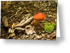 Red Caped Mushroom 1 Greeting Card