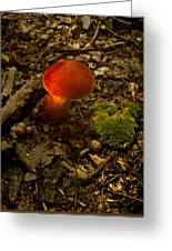 Red Caped Mushroom 4 Greeting Card
