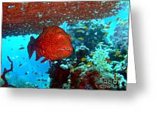 Red Close-up Grouper Greeting Card