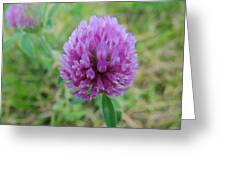 Red Clover Photograph By Jamie Johnson