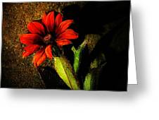 Red Coneflower Greeting Card