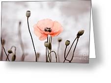 Red Corn Poppy Flowers 01 Greeting Card