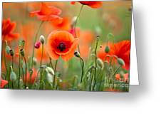 Red Corn Poppy Flowers 05 Greeting Card by Nailia Schwarz