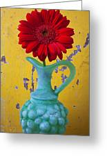Red Daisy In Grape Vase Greeting Card