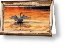 Red Dawn Swan Framed In Old Window Frame Greeting Card