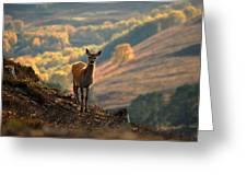 Red Deer Calf Greeting Card
