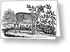 Red Deer Greeting Card by Granger