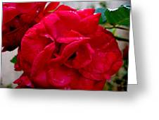 Red Dream Greeting Card