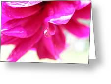 Red Drop Puncak Greeting Card