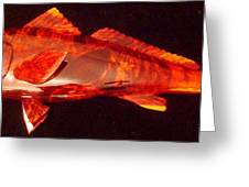 Red Drum Fish  Greeting Card by Douglas Snider