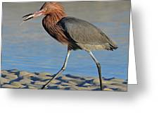 Red Egret With Fish Greeting Card