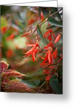 Red Exotic Greeting Card