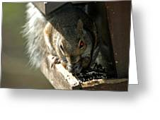 Red Eyed Demon Squirrel Greeting Card