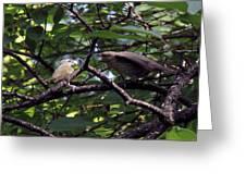 Red-eyed Vireo Feeding Cowbird Fledgling Greeting Card
