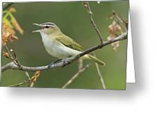 Red-eyed Vireo Vireo Olivaceus Calling Greeting Card
