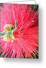 Red Feelers Greeting Card