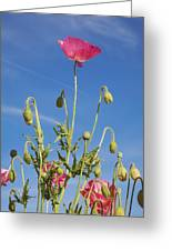 Red Flower Against Blue Sky Greeting Card