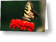 Red Flower And Butterfly Greeting Card