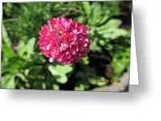 Red Flower Ball Greeting Card