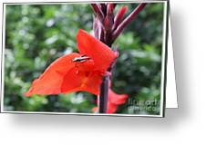 Red Flower With Bug Greeting Card