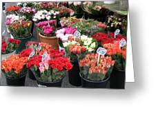 Red Flowers In French Flower Market Greeting Card