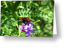 Red Fly Greeting Card
