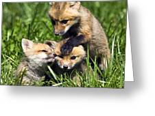 Red Fox Babies - D006647 Greeting Card