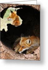 Red Fox Dreaming Greeting Card