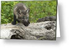 Red Fox Kit Greeting Card