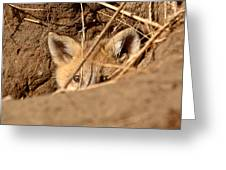 Red Fox Pup Peaking Out Of Den Greeting Card