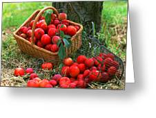 Red Fresh Plums In The Basket Greeting Card