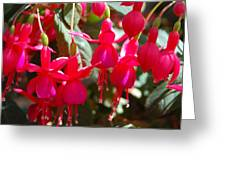 Red Fuchsias Greeting Card