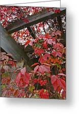Red Grape Leaves And Beams Greeting Card
