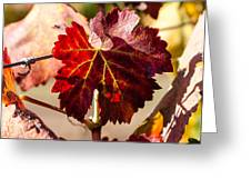 Red Grapeleaves Greeting Card