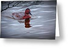 Red Headed Duck Greeting Card