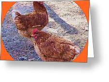 Red Hens 3 Greeting Card