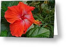 Red Hibiscus Flower Greeting Card