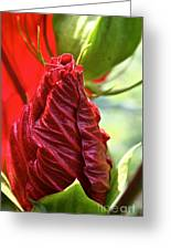 Red Hibiscus Torch Greeting Card
