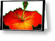 Red Hibiscus With Special Effects Greeting Card