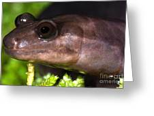 Red Hills Salamander Greeting Card
