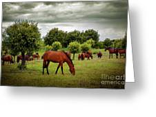 Red Horses Greeting Card