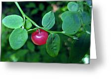 Red Huckleberry Greeting Card
