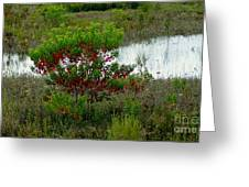 Red In Green Greeting Card