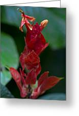 Red Inferno Greeting Card